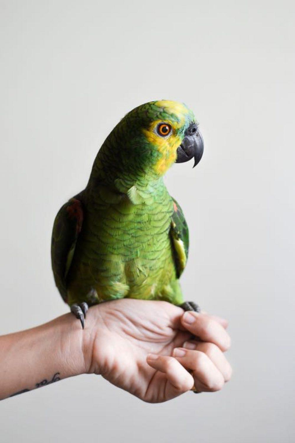 animaux-bird-1284082_1920