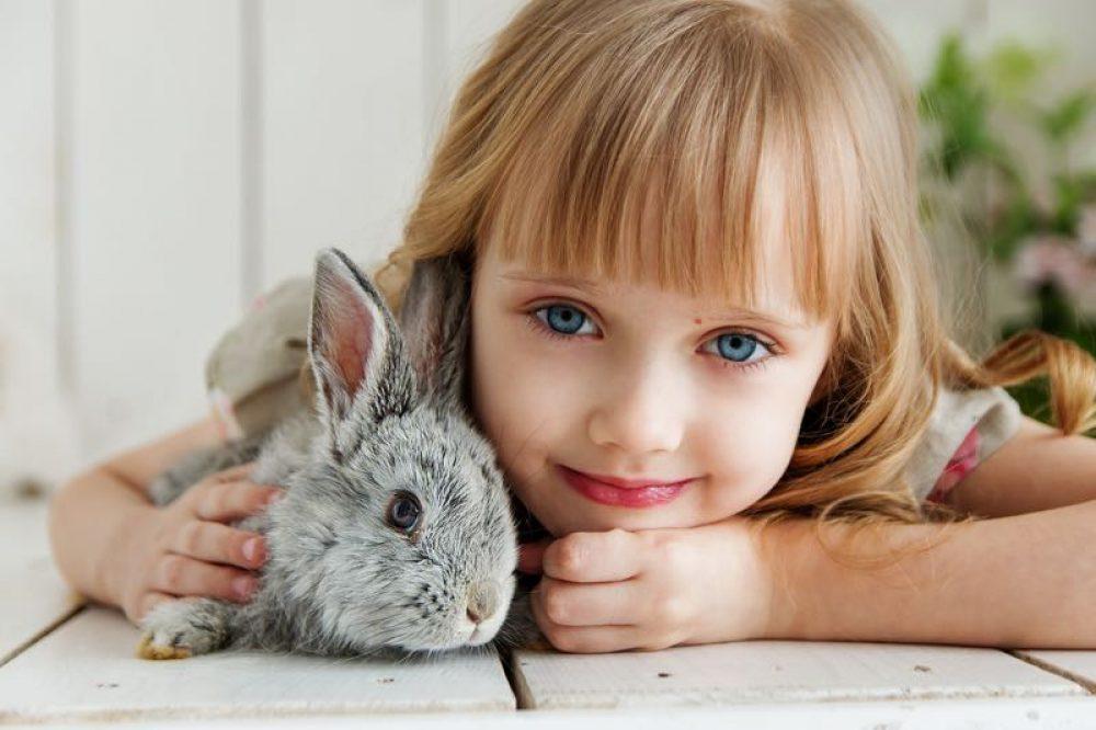 animaux-rabbit-3660673_1920